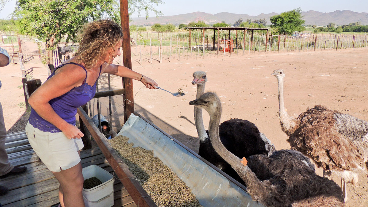 ostrich breeding business