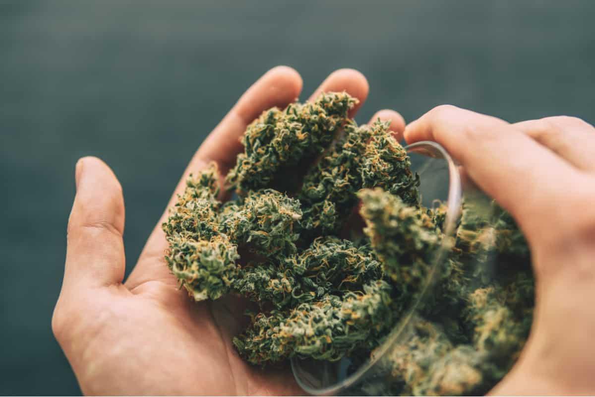 Buy hemp flowers in UK 2021 | 100% legal CBD